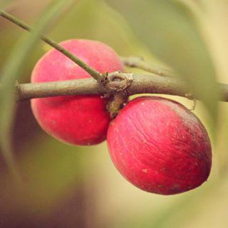 Pilihan Obat Herbal untuk Jantung