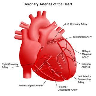 34. jantung koroner adalah