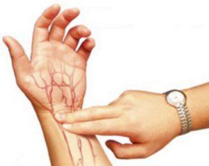 Pembuluh Nadi atau Arteri