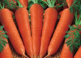 wortel atau ubi jalar