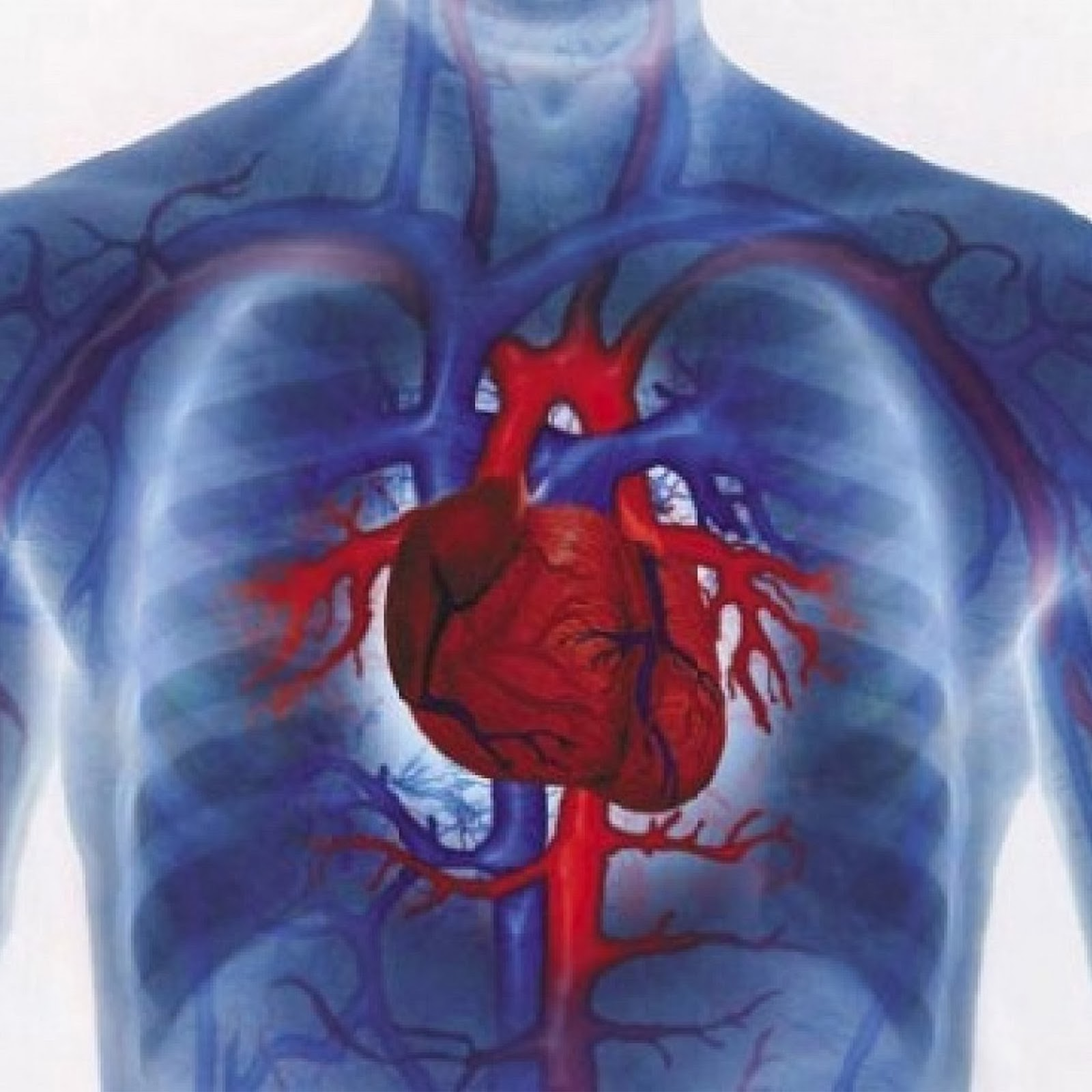 3 Obat Lemah Jantung Herbal dan Alami Termanjur