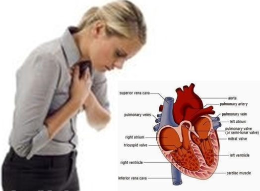 4 Obat Tradisional Jantung Bengkak Terpopuler