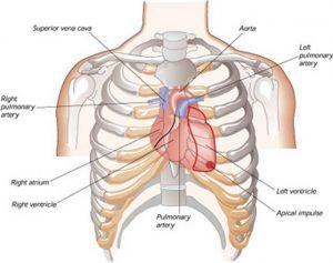 Macam-Macam Penyakit pada Jantung