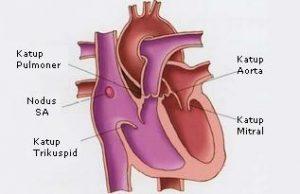 katup jantung